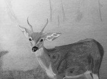Oh dear, oh deer